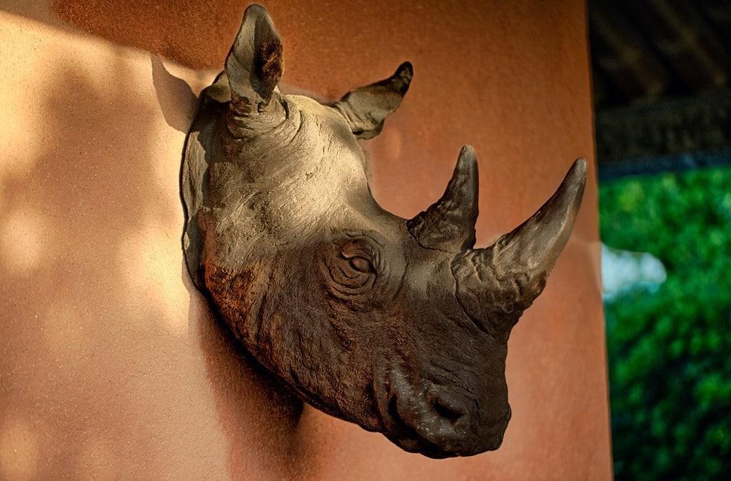 Le Rhinoceros d'Hippocampe