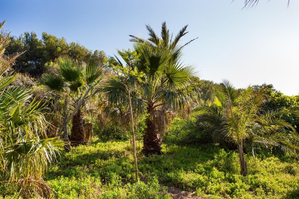 Un parc tropical d'un hectare