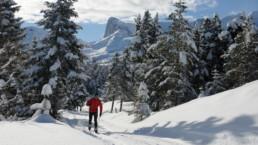 ski de fond près d'une location d'appart à la joue du loup